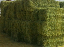 Rhode grass hay, animal feeding grass hay, superb grass hay. dry grass hay