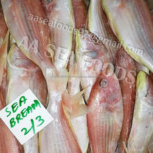 Customer's/requirement A grade Frozen Red Sea Bream Fish