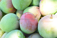 High quality fresh mangoes with best price from Vietnam