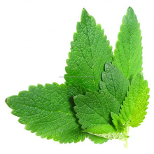 Excellent Quality & Reasonable Price of Spearmint Essential Oil