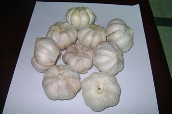 white garlic for sale