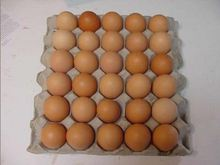 cheap Fertile Hatching Chicken Egg/Fresh Chicken Table Eggs/Quail Eggs for sale Globally