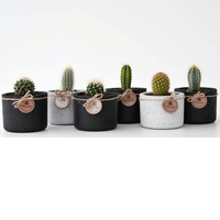 Concrete Planter Square Cement Mini Small gift cactus Succulent flower pot