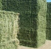 Organic Alfalfa Hay/Alfalfa Grass Hay/Alfalfa Hay Pellets For Animal Feed ......100%