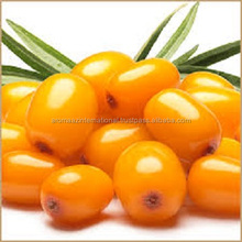 Sea Buckthorn Berry oil bulk price
