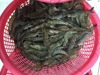 Cheapest price Black Tiger Shrimp from Viet Nam
