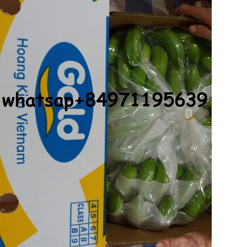Green Cavendish Bananas - whatsapp 0084 97119 5639 - Gold Fruit for HIGH CLASS CLIENTS