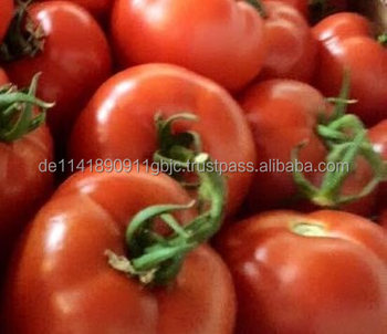 Fresh Tomato 6 cm available for export from