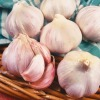 /product-detail/garlic-nootka-rose-50040039746.html