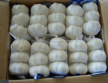 4cm pure white fresh garlic Affordable prices