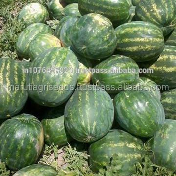 WATERMELON SEEDS FOR EXPORTS