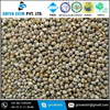Best Indian Price of Green Millet / Bajra With Best Quality