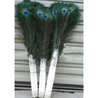PEACOCK FEATHERS / PEACOCK TAIL EYES FEATHERS
