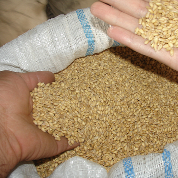 Dried Brewer's Grain