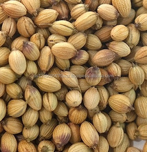 Top Quality Ukraine Origin Coriander Seeds for sales available at factory prices