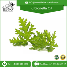 Citronella Java Oil - High Quality