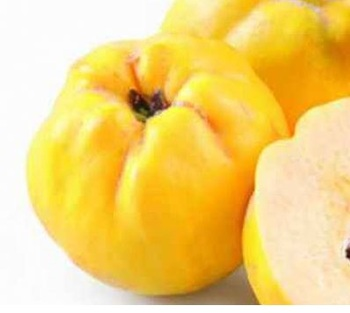 High Quality Fresh Quince and dried quince for sale