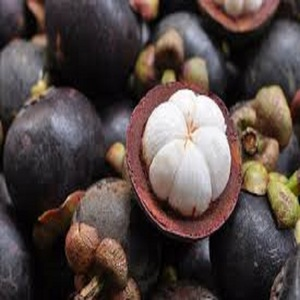 GOOD PURPLE MANGOSTEEN PRICE AND HIGH QUALITY FOR SALE