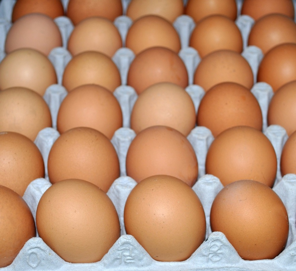 Fresh Holland Eggs for Export
