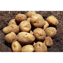 types of potatoes,price of fresh potatoes,names of potatoes