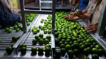 Seedless Lime From KEGO CO., LTD, Vietnam for India market