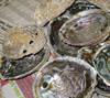 abalone shell,raw abalone shell,polished abalone shell