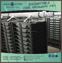 10-tray vertical incubator for growing fry fish the farming of trout fry, salmon by Red fish Co Ltd.