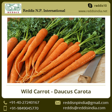 Low Price Fresh Bulk Carrot for Sale