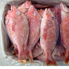 Frozen Red Snapper Whole Round/Best Quality Frozen Red Snapper Fish IQF