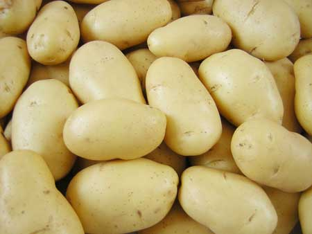 EXCELLENT Holland Potato/yellow holland potato/Fresh Irish potatoes