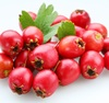 Hawthorn freeze-dried extract powder 100% organic Altai Siberia Perm Urals waterborne hawthorn berry extract