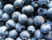 frozen blueberry iqf and fresh blueberry prices