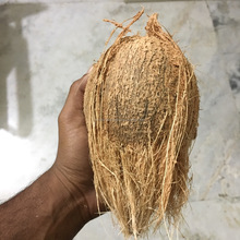 Pollachi Coconut -TOP QUALITY - Cheap Price - Farm Sale