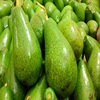 FRESH AVOCADO - COMPETITIVE PRICE FROM VIETNAM