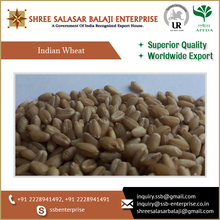 Bulk Selling Whole Grain Wheat at Affordable Rate