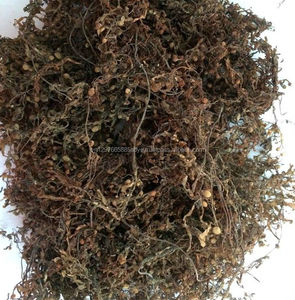 SARGASSUM SEAWEED BROWN SEAWEED FROM VIETNAM (84 1683 655 628)