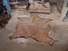 High Quality Donkey Animal Hide/ Leather at Affordable Price