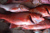 Frozen Northern Red Snapper for Hot SALE from Norway