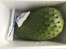 Fresh Healthy Soursop For Sell