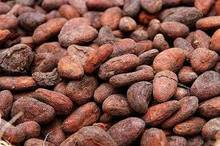 High Quality fermented Cacao Beans