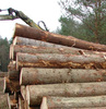 PINE SPRUCE BIRCH OAK ASH LOGS