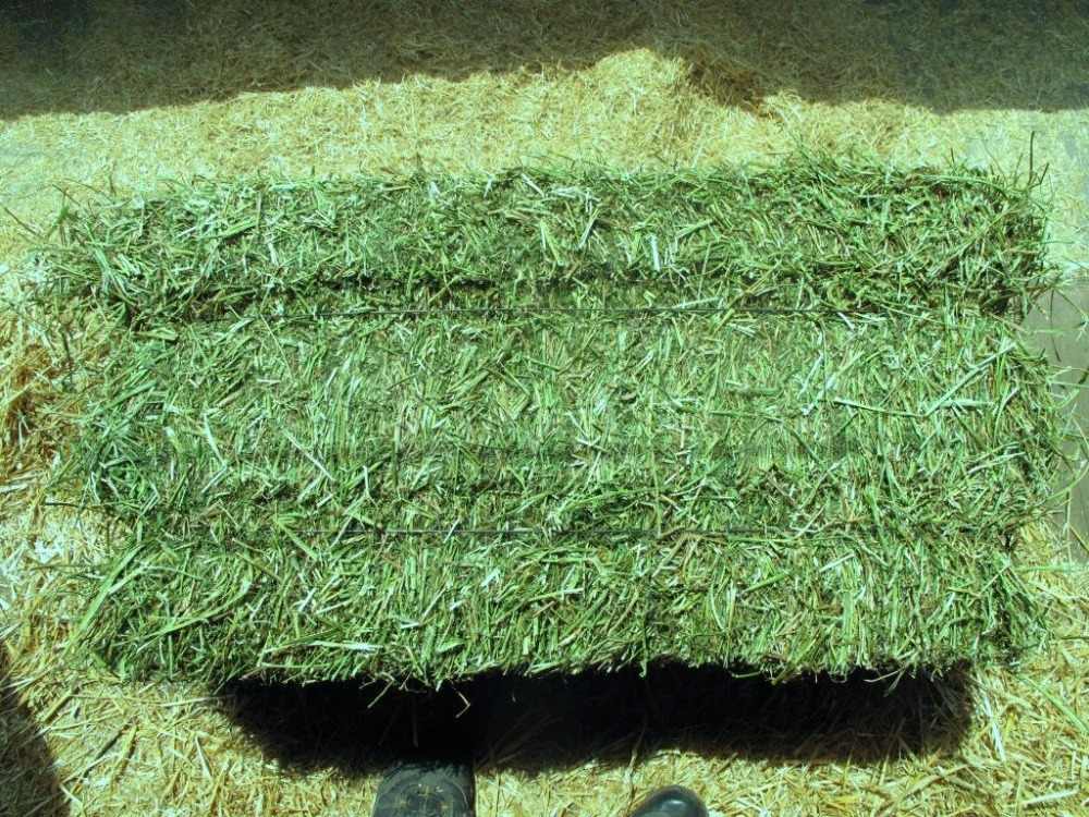 Premium Grade Alfalfa Hay For Sale