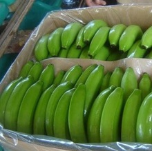 Fresh Bananas/Green Bananas/Cavendish Bananas