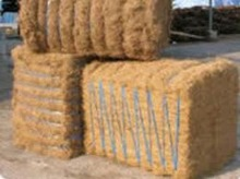 Coconut Coir Fiber Current Prices In India