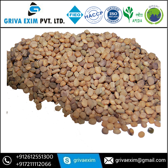 Supply Guar Gum Seed As Per Buyer Requirement Guar Gum