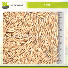 High Quality Organic Ukrainian Oats