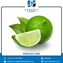 Fresh Seedless Persian Lime at Best Price