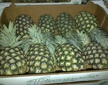 Grade A Fresh Md2 Golden Pineapple / Fresh Golden Pineapple