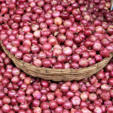 Nasik Onions for Export in UAE