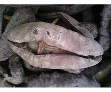 Dried Sea Cucumber 100% natural good for Health_White teat sea cucumber